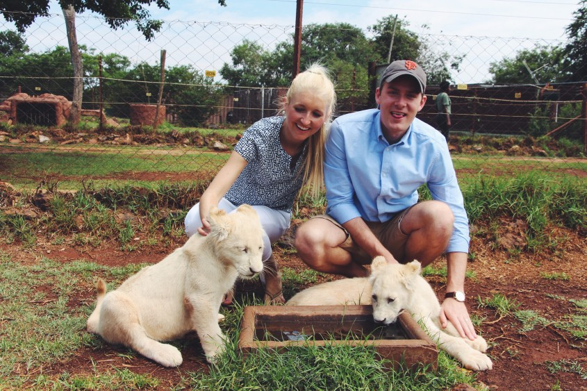 Lion Park South Africa Well Traveled Wife